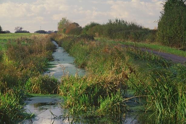 Water vole habitat Paul Glendell