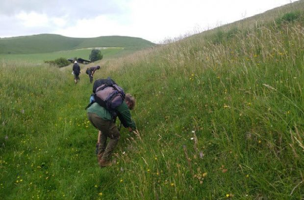 volunteers on Wiltshire's chalk grasslands