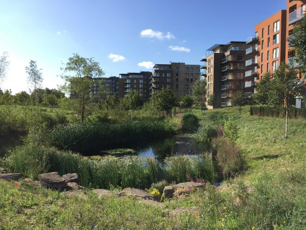 meadow and pond in front of a new housing development