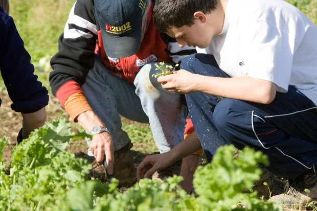 Two teenage boys kneeling in a field picking lettuces
