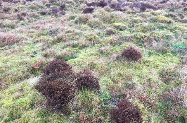 Image of peatland in the Forest of Bowland, Lancashire