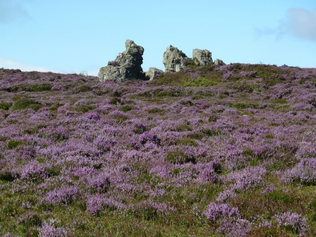 Purple heather and rock formations at Shropshire's Stiperstones hills