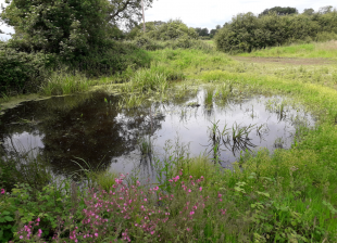 A pond is seen in a meadow