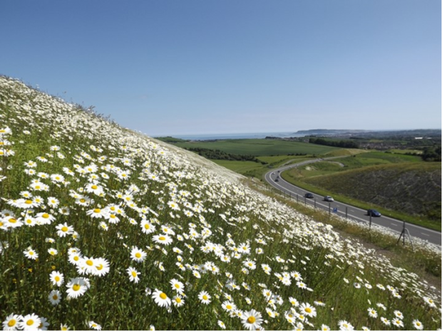 image of flowers next to a road