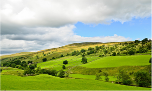 Lush rolling green hills with some interspersed trees.