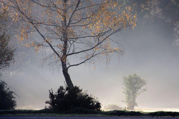 image of mist and tree