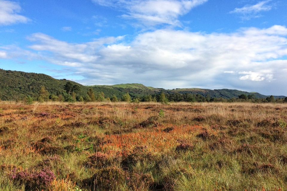 lowland bog under blue sky